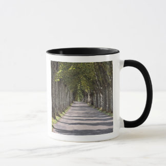 Europa, Frankreich, Cereste. Bäume zeichnen diese Tasse