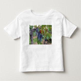 Europa, Frankreich, Roussillon. Weinberge, mit Kleinkinder T-shirt