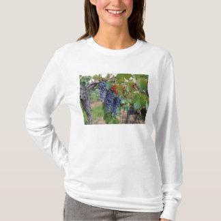 Europa, Frankreich, Roussillon. Weinberge, mit T-Shirt