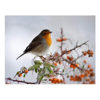 Europäer Robin und orange Beere Postkarte