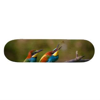 Europäische Bienen-Esser-Vögel in Ariège Frankreic Personalisierte Skateboards