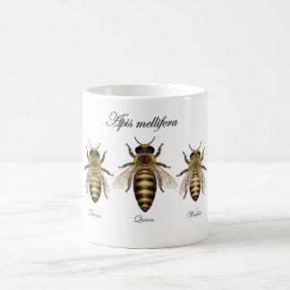 Europäische Honigbiene (API mellifera) Kaffeetasse