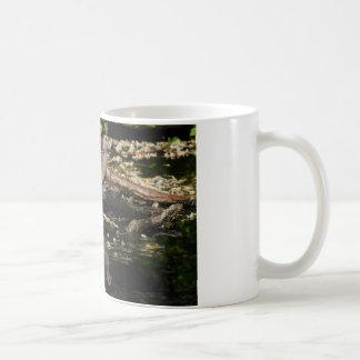 Europäische Schildkrötetaube Kaffeetasse