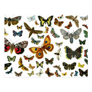 Europäische Schmetterlings-Collage Postkarte