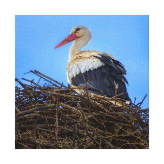 Europäischer weißer Storch, Ciconia, im Nest Leinwanddruck