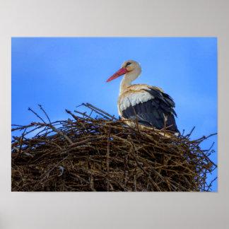 Europäischer weißer Storch, Ciconia, im Nest Poster