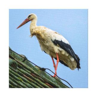 Europäischer weißer Storch, Ciconia Leinwanddruck