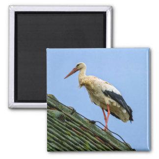 Europäischer weißer Storch, Ciconia Quadratischer Magnet