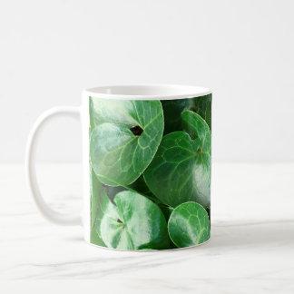 Europäisches wilder Ingwer-glattes Blätter-nahes Kaffeetasse