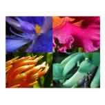 Exotische Blüten-Postkarte