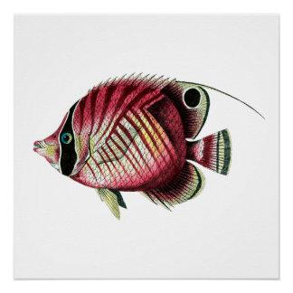 Exotische bunte Fische Poster