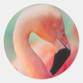 Exotische rosa Flamingo-Vogel-Aufkleber Runder Aufkleber