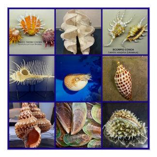 Exotische SeaShell-Fotografie Sanibel Insel Poster