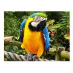 Exotischer Papagei Postkarten