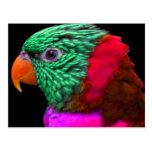 Exotisches Papageien-Grün-rotes Rosa Postkarte