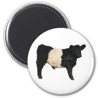 Extravagant ein Oreo? Umgeschnallte Galloway-Kuh Runder Magnet 5,7 Cm