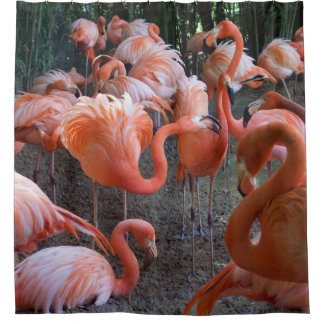 Extravagante Flamingos Duschvorhang
