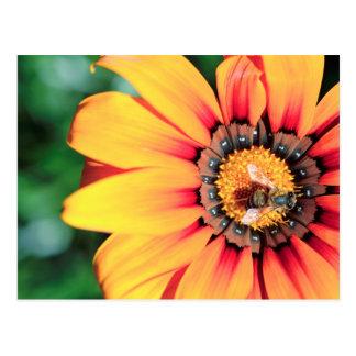 Extreme Nahaufnahme einer Biene, die Blütenstaub Postkarte