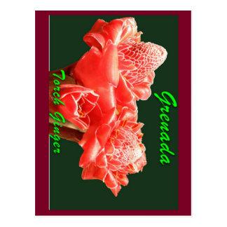 Fackel-Ingwer Postkarte