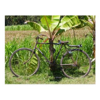 Fahrrad unter Bananenbaum Postkarte