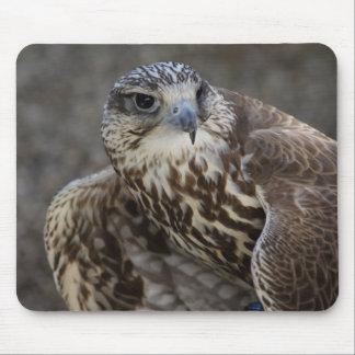 Falco cherrug mousepad