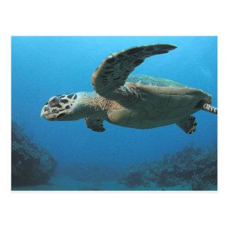 Falke-Bill-Schildkröte Postkarte