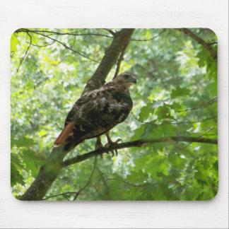 Falke, der Walden genießt Mousepads