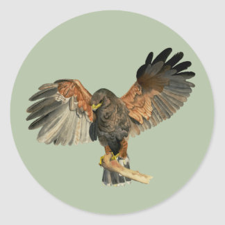 Falke-Flattern Wings Aquarell-Malerei Runder Aufkleber
