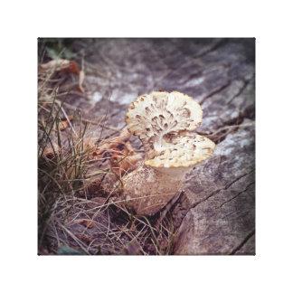 Falke-Flügel-Pilz auf dem Boden Leinwanddruck