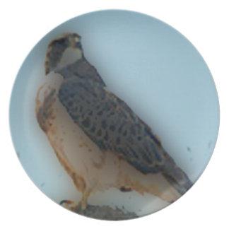 'Falke gehockt auf einem Post Party Teller
