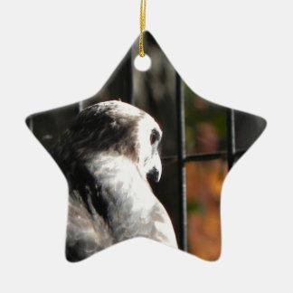 Falke in einem Vogelschutzgebiet Keramik Ornament