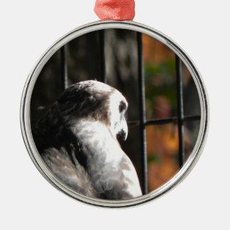 Falke in einem Vogelschutzgebiet Silbernes Ornament