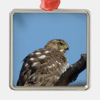 Falke Silbernes Ornament