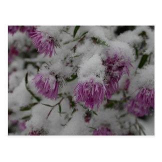 Fall-Blumen - Neu-England Astern im Schnee Postkarte