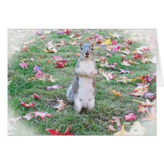 Fall-Eichhörnchen Karte