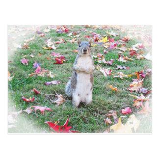 Fall-Eichhörnchen Postkarte