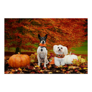 Fall-Erntedank - Monty Fox-Terrier u. Milly Malz Poster