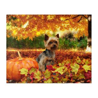 Fall-Erntedank - Tucker - Yorkie Acryl Wandkunst