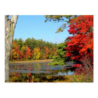 Fall-Farbe in Neu-England Postkarte