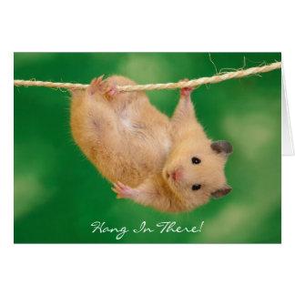Fall herein dort! Hamster Karte