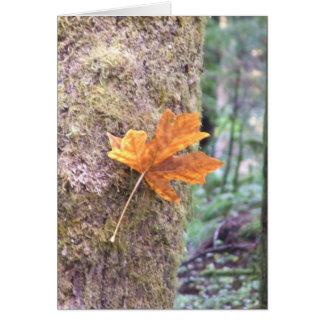 Fall herein dort karte