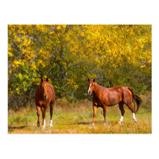 Fall-Kastanien-Pferde Postkarte