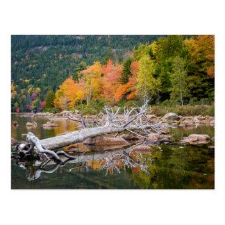Fall von Maine Postkarte