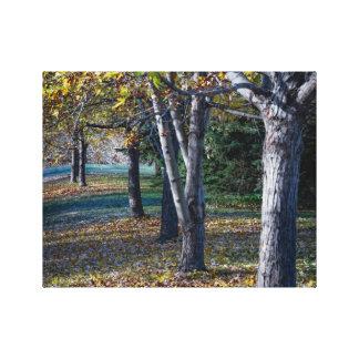 Fallbäume Ontario Leinwanddruck