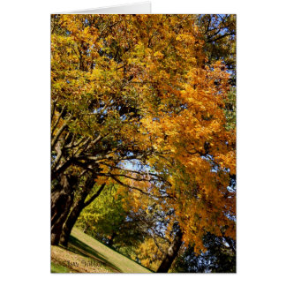 Fallbäume, Sherri Williams Karte
