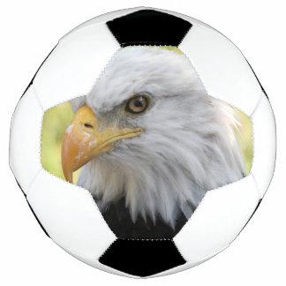 Falln Weißkopfseeadler-Freiheit Fußball
