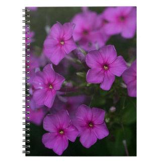 Fallphlox-Rosa-Wildblume-Blumennotizbuch Spiral Notizblock