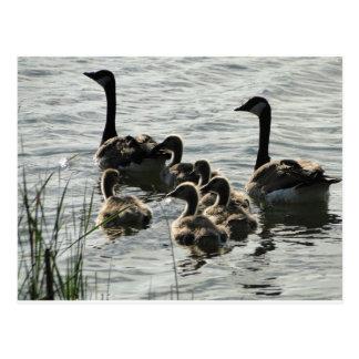 Familie der Gänse auf See Postkarte