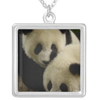 Familie des Panda-(Ailuropoda melanoleuca): 5 Versilberte Kette