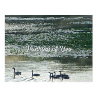 Familie von Kanada-Gänsen, die an Sie denken Postkarte
